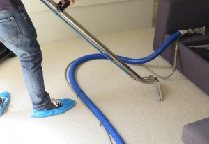 expert carpet cleaners kensington